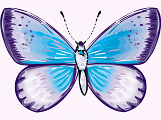 Blue amd purple butterfly on white background